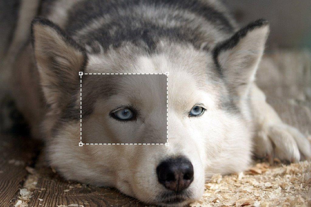 dog-crop